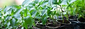 Семена, рассада, удобрения
